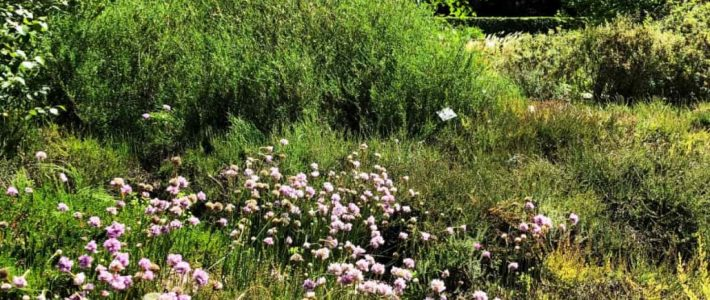Ein Heidegarten vor Ort